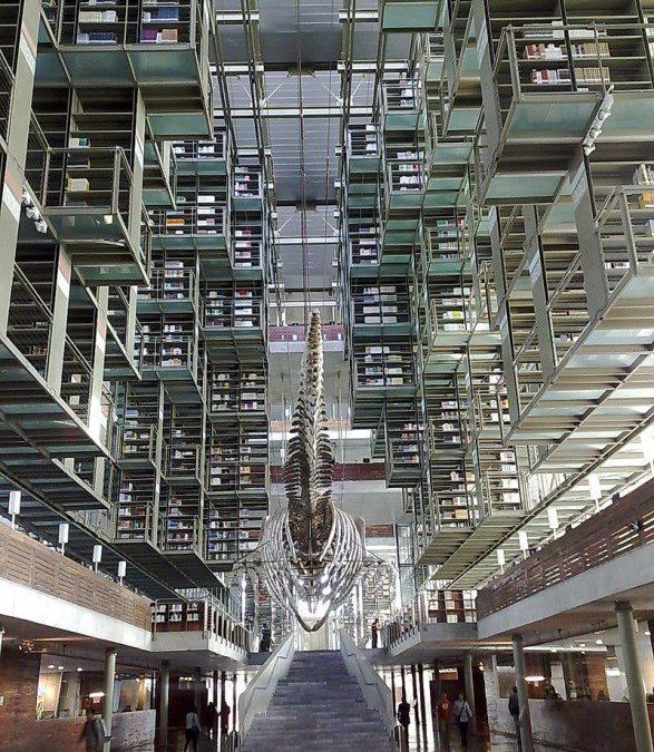 Você sabe o que é uma biblioteca humana?